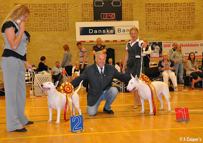 gallery/world_dog_show_2010dk_149_n